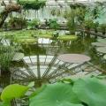 botanicheskij-sad-berlina-13