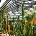 botanicheskij-sad-berlina-16