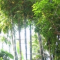 botanicheskij-sad-berlina-8