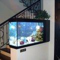domashnij-akvarium-uhod-i-soderzhanie-14