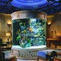 domashnij-akvarium-uhod-i-soderzhanie-15
