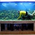 domashnij-akvarium-uhod-i-soderzhanie-16