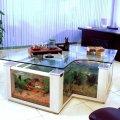 domashnij-akvarium-uhod-i-soderzhanie-18