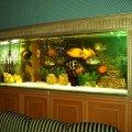 domashnij-akvarium-uhod-i-soderzhanie-20
