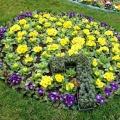 Цифра семь 7 из цветов