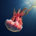 Фото подводного мира от Александра Семёнова