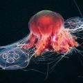 foto-podvodnogo-mira-ot-aleksandra-semyonova-11