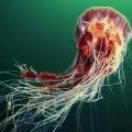 foto-podvodnogo-mira-ot-aleksandra-semyonova-19