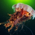 foto-podvodnogo-mira-ot-aleksandra-semyonova-22