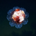 foto-podvodnogo-mira-ot-aleksandra-semyonova-28