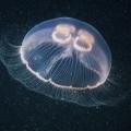 foto-podvodnogo-mira-ot-aleksandra-semyonova-30