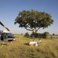 gostinitsa-eagle-island-camp-dlya-lyubitelej-safari-14