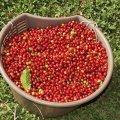 kofejny-e-zerna-prinosyat-zdorov-e-krasotu-i-pomogayut-v-by-tu-14