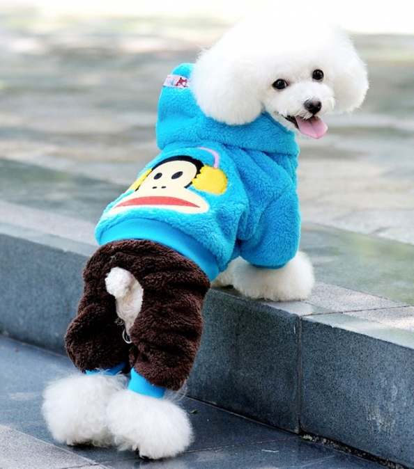 Дизайн одежды для собак