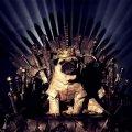 - косплей на тему сериала Игра престолов 1