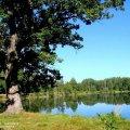 natsional-ny-j-park-belovezhskaya-pushha-dostoprimechatel-nosti-belarusi-1