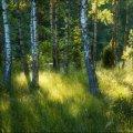 natsional-ny-j-park-belovezhskaya-pushha-dostoprimechatel-nosti-belarusi-16