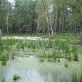 natsional-ny-j-park-belovezhskaya-pushha-dostoprimechatel-nosti-belarusi-2