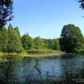 natsional-ny-j-park-belovezhskaya-pushha-dostoprimechatel-nosti-belarusi-3