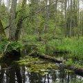 natsional-ny-j-park-belovezhskaya-pushha-dostoprimechatel-nosti-belarusi-5