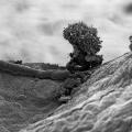 nanoart-fotografa-majkla-oliveri-1