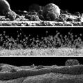 nanoart-fotografa-majkla-oliveri-2