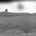 nanoart-fotografa-majkla-oliveri-5