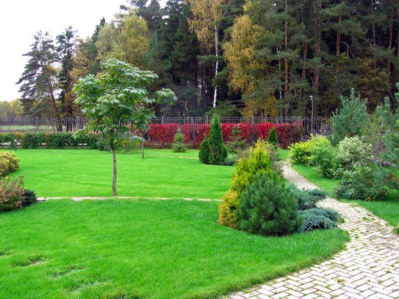Ландшафт земельного участка цветы деревья кусты