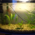 ry-bki-v-akvariume-i-ih-pol-za-10
