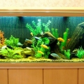 ry-bki-v-akvariume-i-ih-pol-za-11