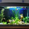 ry-bki-v-akvariume-i-ih-pol-za-12