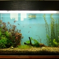 ry-bki-v-akvariume-i-ih-pol-za-13