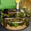 ry-bki-v-akvariume-i-ih-pol-za-2