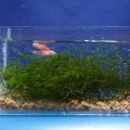 ry-bki-v-akvariume-i-ih-pol-za-3