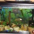 ry-bki-v-akvariume-i-ih-pol-za-4