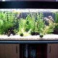 ry-bki-v-akvariume-i-ih-pol-za-5