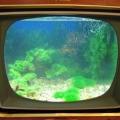 ry-bki-v-akvariume-i-ih-pol-za-6