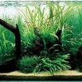 ry-bki-v-akvariume-i-ih-pol-za-7