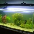 ry-bki-v-akvariume-i-ih-pol-za-8