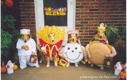 Собачий костюм на Хеллоуин