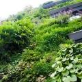 sozdaem-visyachie-sady-na-svoem-balkone-ili-terrase-11