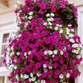 sozdaem-visyachie-sady-na-svoem-balkone-ili-terrase-6