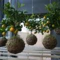 sozdaem-visyachie-sady-na-svoem-balkone-ili-terrase-7