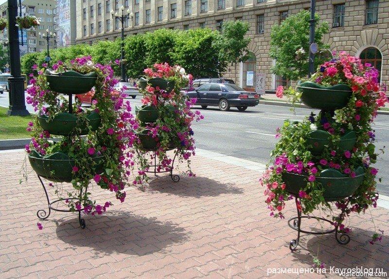 Как украсить дом двор цветами фото