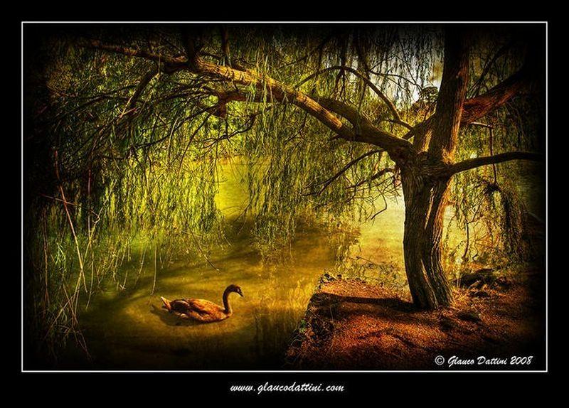Фотохудожник Glauco Dattini