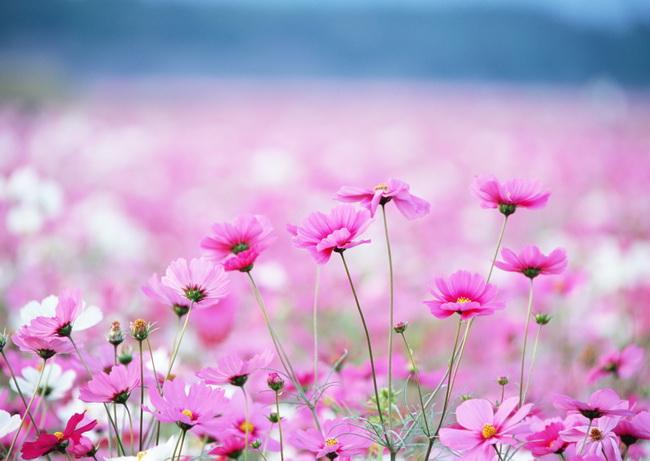 Ванильные фотографии цветов от Sozaijiten