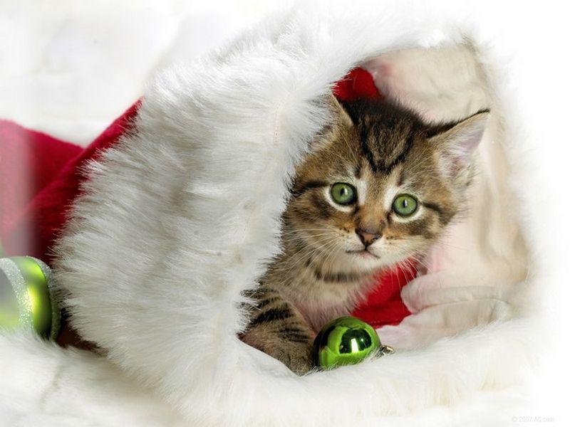 Праздничные красивые новогодние картинки для любителей котов напоминают нам о скором наступлении этого всеми любимого праздника.