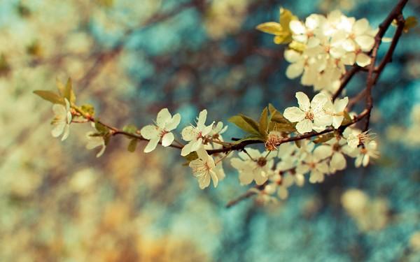 Фотографируем весенние цветы - советы и примеры