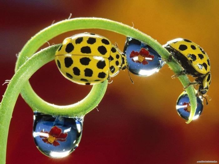 Макро-фото - природа, капли, насекомые