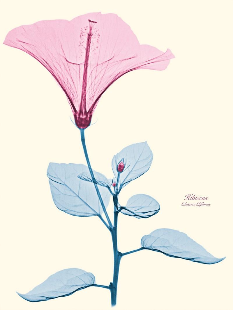 Рентгеновские снимки цветов от Brendan Fitzpatrick